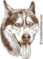 gravure, tête, chien, illustration, husky, dessin