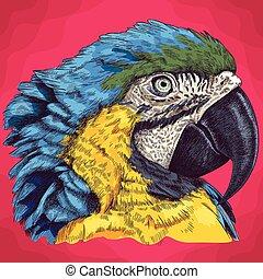 gravure, tête, macaw, illustration