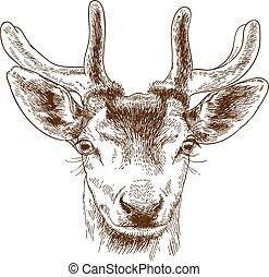 gravure, tête renne, illustration