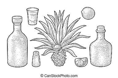 gravure, tequila., sel, vendange, botlle, verre, lime., cactus