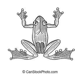 gravure, vecteur, grenouille