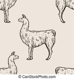 gravure, vecteur, lama, animal, illustration