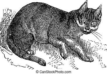 gravure, vendange, wildcat