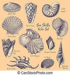 gravures, vector, zee, verzameling, doppen