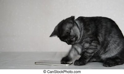 Gray 4 month old kitten playing with cell phone - Gray 4...