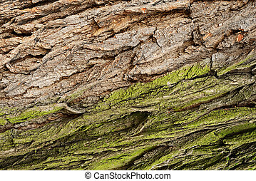 Gray and green tree bark
