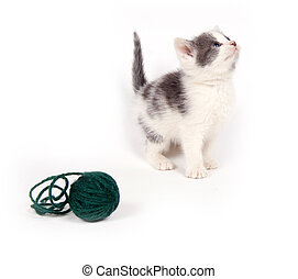 Gray and white kitten looking up with yarn - A gray and...