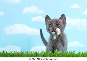 Gray and white tabby cat in tall grass