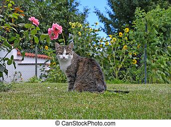 tabby cat on green grass
