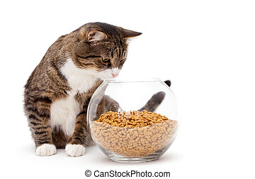 Gray cat and dry food - Striped, gray cat and a heap of dry...