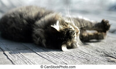 Gray cat basking in the sun