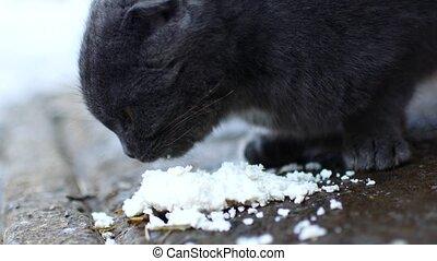 Gray cat eats with pleasure.