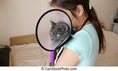 Gray cat in a veterinary collar with a bandaged paw on the hands of a brunette woman