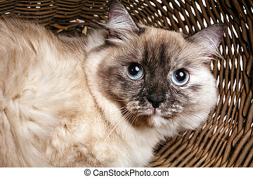 gray cat in a wooden basket