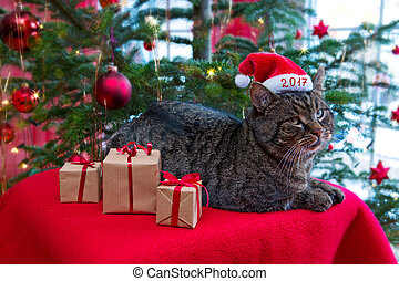 Gray cat in Christmas hat 2017 .