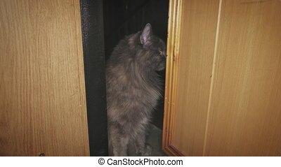 Gray cat is sitting after open door