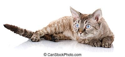 gray cat lying on white