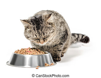 gray cat mongrel with a bowl of dry food