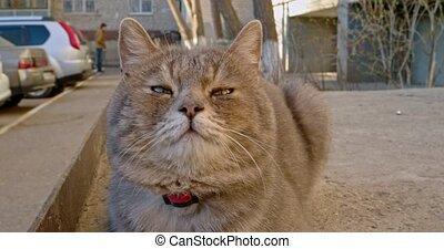Gray cat muzzle closeup near the parking lot handheld shot