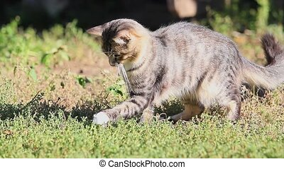 gray cat playing with a mouse in green grass