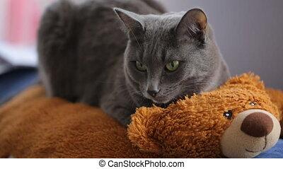 Gray cat resting on a teddy bear