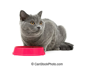 gray cat sits beside a bowl of food on white background