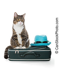Gray cat sitting on a green suitcase