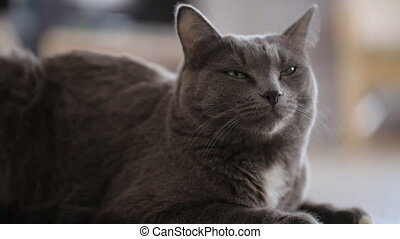 Gray cat sitting on floor