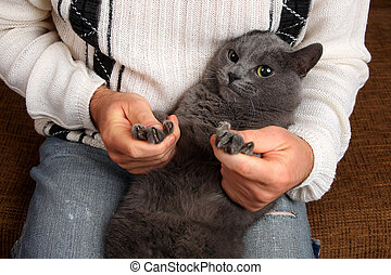 gray cat sitting on the lap of a man