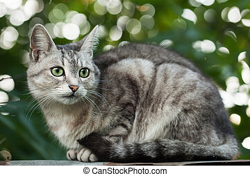 Gray cat sitting on a fence