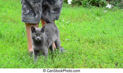 Gray cat stroking your child's legs - A gray cat stroking...