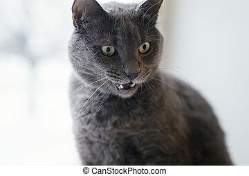 gray cat surprised face