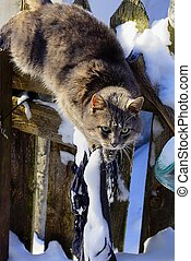 gray cat walking on a fence in the snow