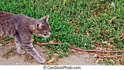Gray cat walking outside along the grass edge