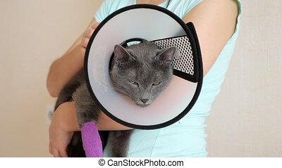 Gray cat with a bandaged paw and an elizabethan collar falls...