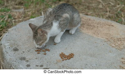 Gray cat with a white muzzle quickly eats dry food on the street.