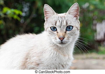Gray cat with blue eyes on the street close up
