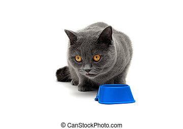 gray cat with yellow eyes isolated on a white background