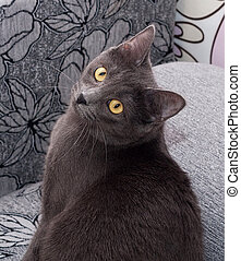 Gray cat with yellow eyes sitting on colorful