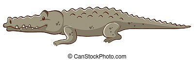 Gray crocodile on white background