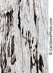Gray driftwood closeup