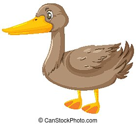 Gray duck on white background