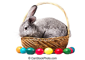 gray easter bunny in a basket with eggs, isolate