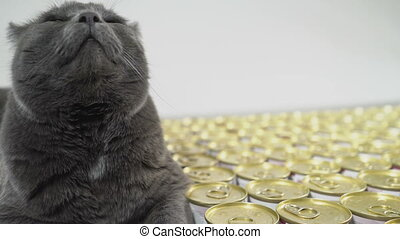 Gray fat cat lying near cans with food for cats. Wet canned...