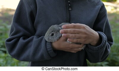 Gray fluffy rabbit in the hands of a girl