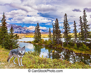 Gray forest wolf on the shore