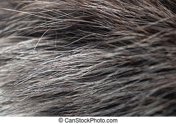 Gray fur with wool close up, texture or background