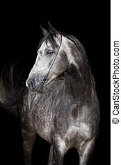 Gray horse head on black background