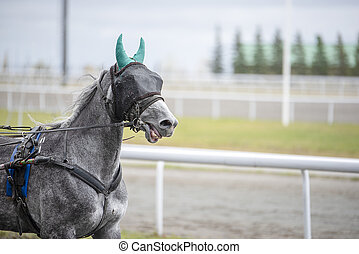 Gray horse with a blindfold on runs
