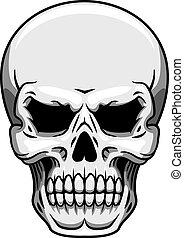 Gray human skull on white